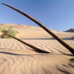 oryx_skelettküste_hautnah