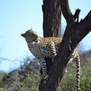 Namibia- und Süd Afrikareise 2016